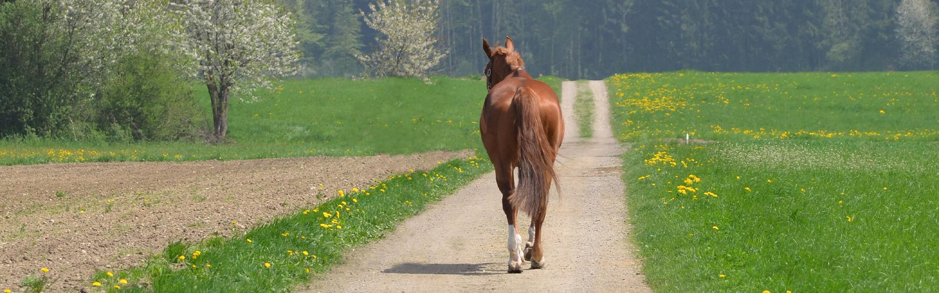 Crématoire pour chevaux Kirchberg - Le déroulement - Pferdekrematorium Kirchberg